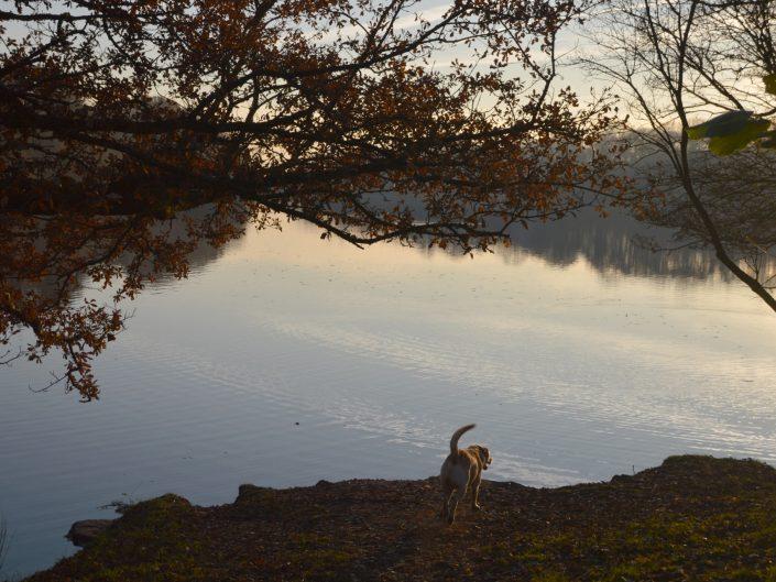 Jumbles Country Park, November 2016 © Luchia Houghton