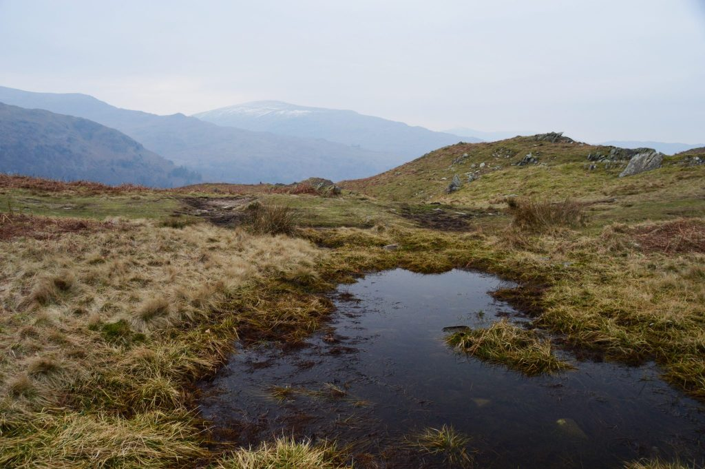 Loughrigg Fell Marsh 14th February 17 © Luchia Houghton